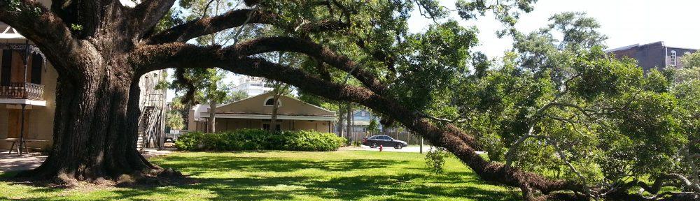 Historic live oak