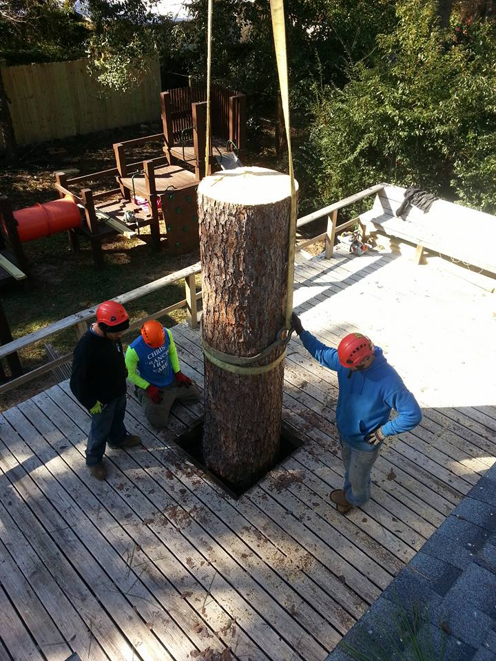 Crane 1 Stump Removal