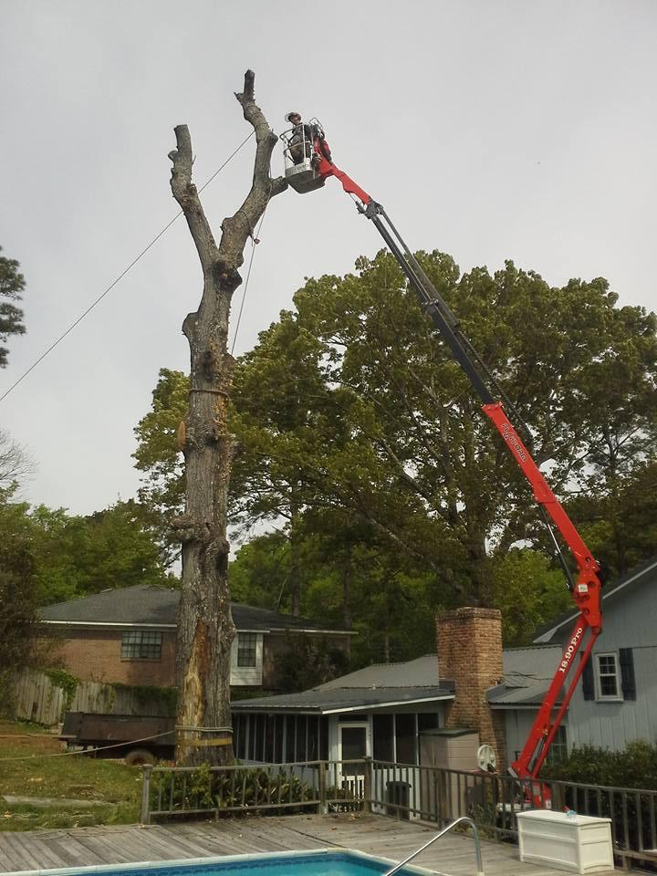 Crane 3 Tree Removal